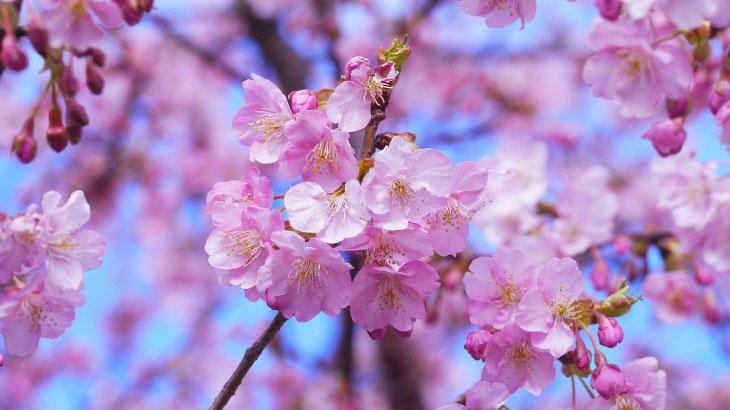 「桜を見る会」問題について調べてみました